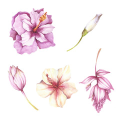 Set of tropical flowers. Hand draw watercolor illustration