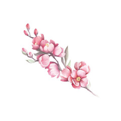 Branch of Japanese quince. Hand draw watercolor illustration
