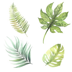 Set of leaves of tropical plants. Watercolor illustration.