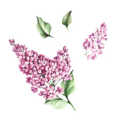 The set of images of flowers and leaves of lilac. Watercolor illustration.