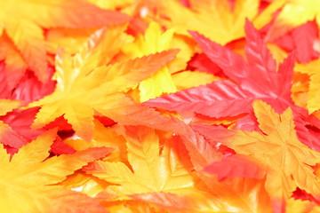 落ち葉イメージ Leaf background image