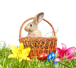 On a white background Easter basket with rabbit