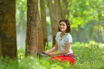 woman rubber tapping in rubber tree row Agricultural,Thailand