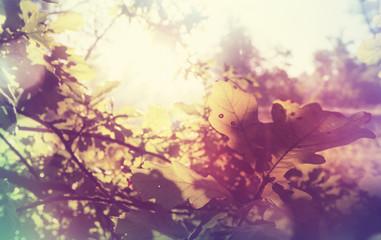 Papiers peints Grenat Autumn leaves