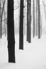 Winter foggy landscape in the park
