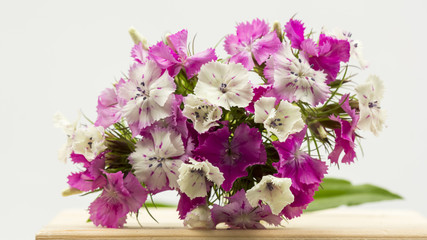 Beautiful chinese carnations (Dianthus chinensis) with details on a wooden surface