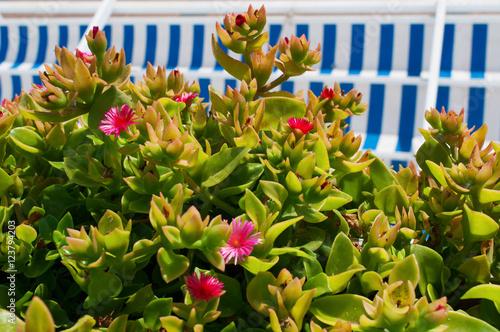 Decorazione desterni in stile marinaro: una pianta grassa con