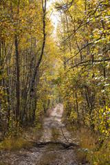 Beautiful colorful autumn landscape