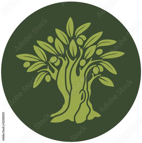 Albero di olivo immagini e vettoriali royalty free su for Albero ulivo vettoriale