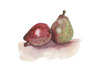 Red and green pear. Watercolors on white background