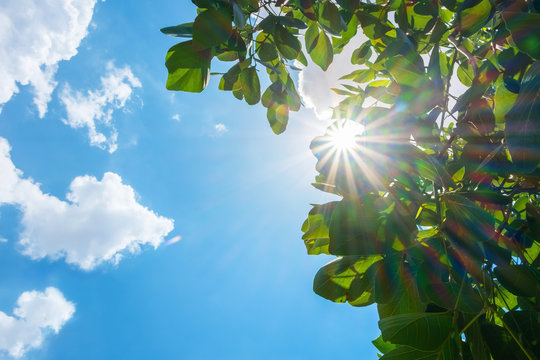 Looking up at sun burst behind tree leaf with cloud and blue sky