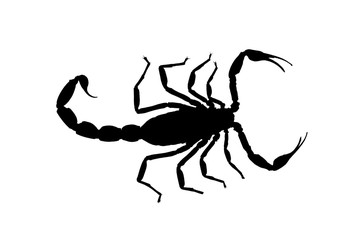 black contour scorpion isolated on white background