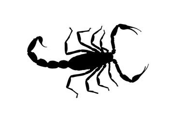 black contour scorpion isolated on white background