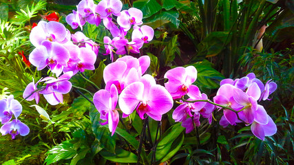 Beautiful orchid flower tree with sunset tone.