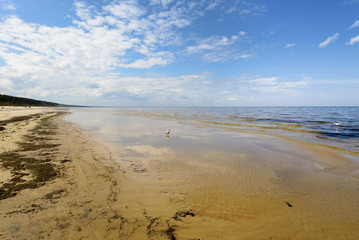 Baltic seashore