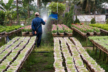 A gardener waters the flowers in his garden in Sa Dec, Dong Thap, Vietnam. Sadec is place product many flower for Lunar New Year (Tet holiday)