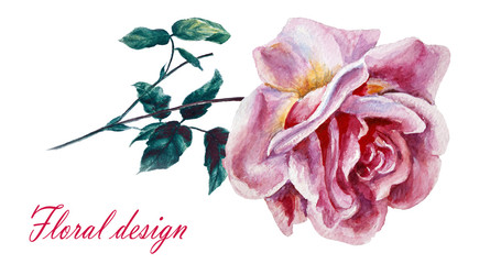 Flowers rose with leaves, watercolor, illustration