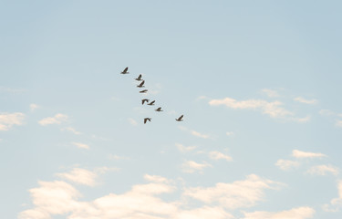 Birds flying in a blue sky at sunrise