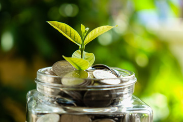 business finance save money for investment concept plant growing