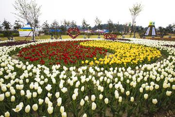 신안 튤립축제장ㅇㅣ 꽃밭