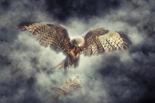 Eagle in smoke