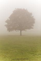 Wall Mural - Single Tree in Mist or Fog