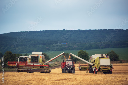 Wall mural Working Harvesting Combine in the Field of Wheat