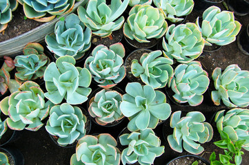 Garden succulents composition