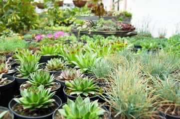 Pretty succulents composition, flower market