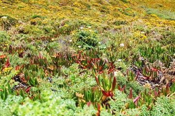 Succulents landscape