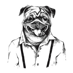 Fototapete - Hand drawn dressed up pug in hipster style