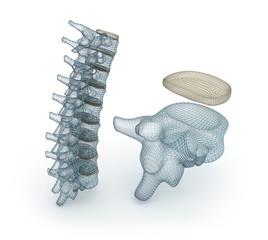 Human Spinal cord wire model, 3d illustration