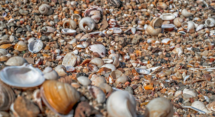 A variety of sea shells on the beach