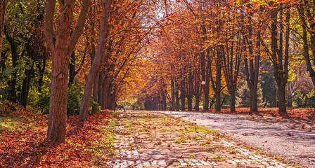 Autumnal chestnut alley