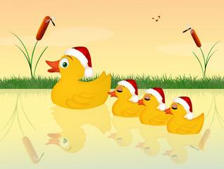 family of ducks at Christmas