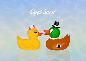 Marriage of ducks