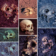 Human skull collection, narrow focus, colors manipulated
