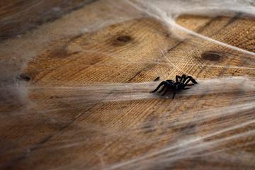 Cobwebs on wood texture