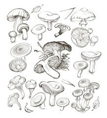 Vector hand drawing a set of mushrooms.
