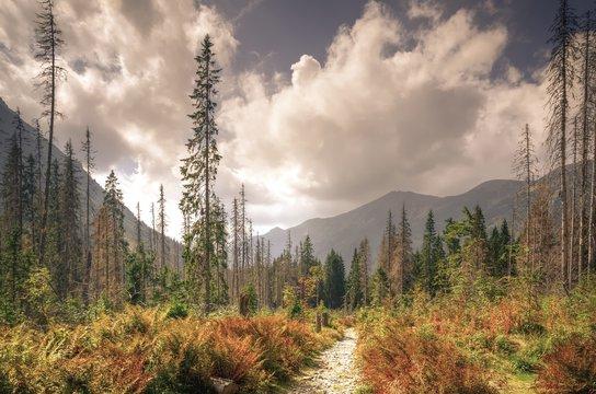 Summer mountain landscape. Mountain trail in beautiful summer scenery in High Tatra, Slovakia.