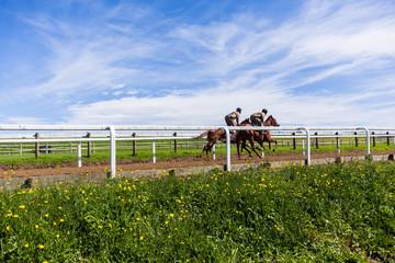 Race Horses Jockeys Training Runs