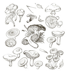 Vector hand drawing a set of mushrooms.