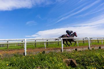 Race Horse Jockey Training Runs