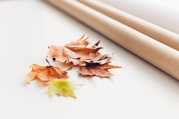 Foliage and wrapping paper