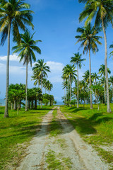 the road in coconut tree along the path and blue sky