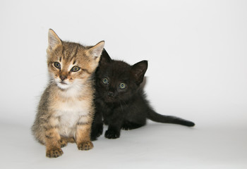 Ritratto in studio di due gattini