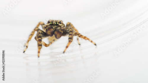 """2480 X 520 Pixels Related Keywords: """"Springspinne"""" Immagini E Fotografie Royalty Free Su"""