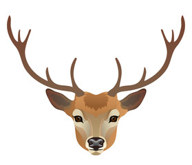 Vector deer face isolated on white wild animal portrait zoo icon