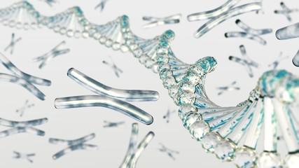 chromosome. DNA.