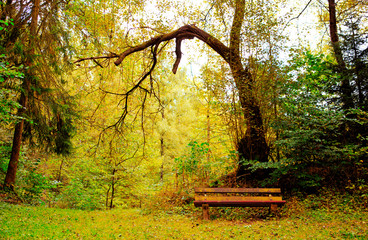 Wooden bench in forest.